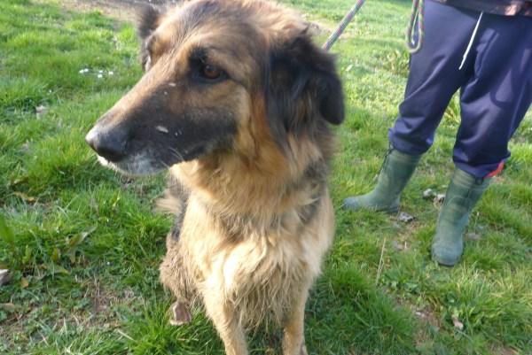 Bildertagebuch -  Urbania: Wunderschöne DOG VILLAGE- Hündin benötigt dringend Ihre Hilfe! über andere Orga  ZUHAUSE GEFUNDEN! 26455940ry