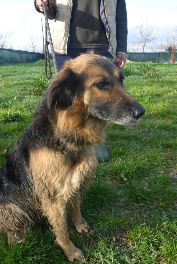 Bildertagebuch -  Urbania: Wunderschöne DOG VILLAGE- Hündin benötigt dringend Ihre Hilfe! über andere Orga  ZUHAUSE GEFUNDEN! 26455941gg