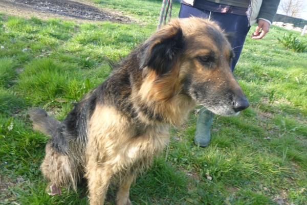 Bildertagebuch -  Urbania: Wunderschöne DOG VILLAGE- Hündin benötigt dringend Ihre Hilfe! über andere Orga  ZUHAUSE GEFUNDEN! 26455943ty