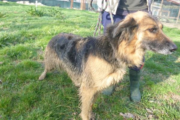 Bildertagebuch -  Urbania: Wunderschöne DOG VILLAGE- Hündin benötigt dringend Ihre Hilfe! über andere Orga  ZUHAUSE GEFUNDEN! 26455944xl