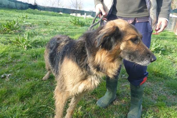 Bildertagebuch -  Urbania: Wunderschöne DOG VILLAGE- Hündin benötigt dringend Ihre Hilfe! über andere Orga  ZUHAUSE GEFUNDEN! 26455945dw