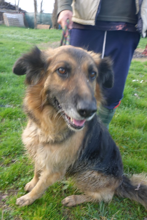 Bildertagebuch -  Urbania: Wunderschöne DOG VILLAGE- Hündin benötigt dringend Ihre Hilfe! über andere Orga  ZUHAUSE GEFUNDEN! 26455946ob
