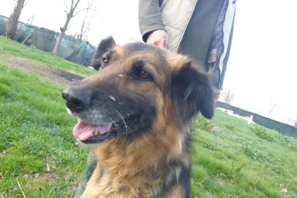 Bildertagebuch -  Urbania: Wunderschöne DOG VILLAGE- Hündin benötigt dringend Ihre Hilfe! über andere Orga  ZUHAUSE GEFUNDEN! 26455948qo
