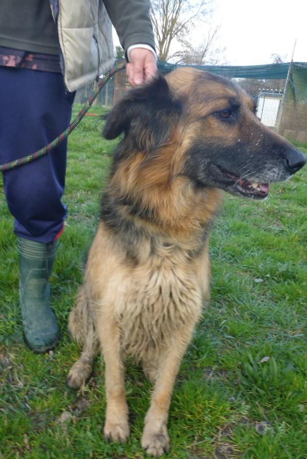 Bildertagebuch -  Urbania: Wunderschöne DOG VILLAGE- Hündin benötigt dringend Ihre Hilfe! über andere Orga  ZUHAUSE GEFUNDEN! 26455949ag