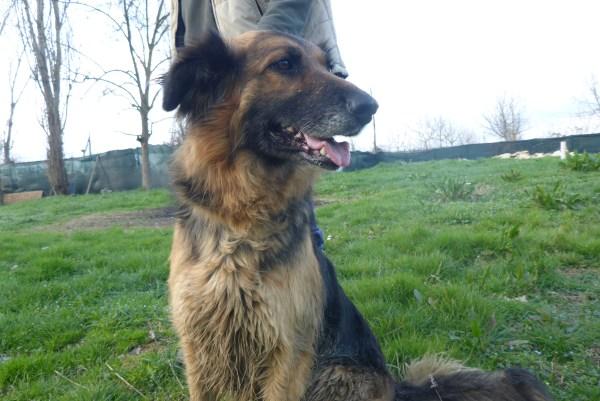 Bildertagebuch -  Urbania: Wunderschöne DOG VILLAGE- Hündin benötigt dringend Ihre Hilfe! über andere Orga  ZUHAUSE GEFUNDEN! 26455950lz
