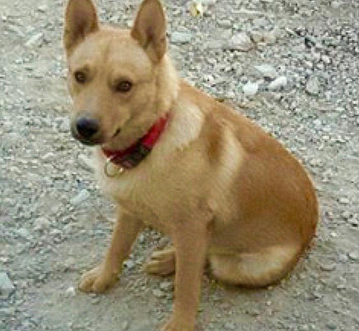 Bildertagebuch - Dingo, hübscher junger und verspielter Kerl ... Sie sind auf der Suche nach einem tollen Hundekumpel - VERMITTELT - 26520484it