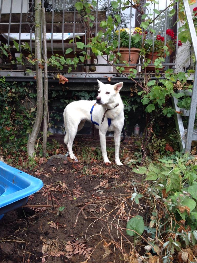 Bildertagebuch - Roccia: Ein wunderbarer, ganz besonderer Hund - VERMITTELT - 26878360ma
