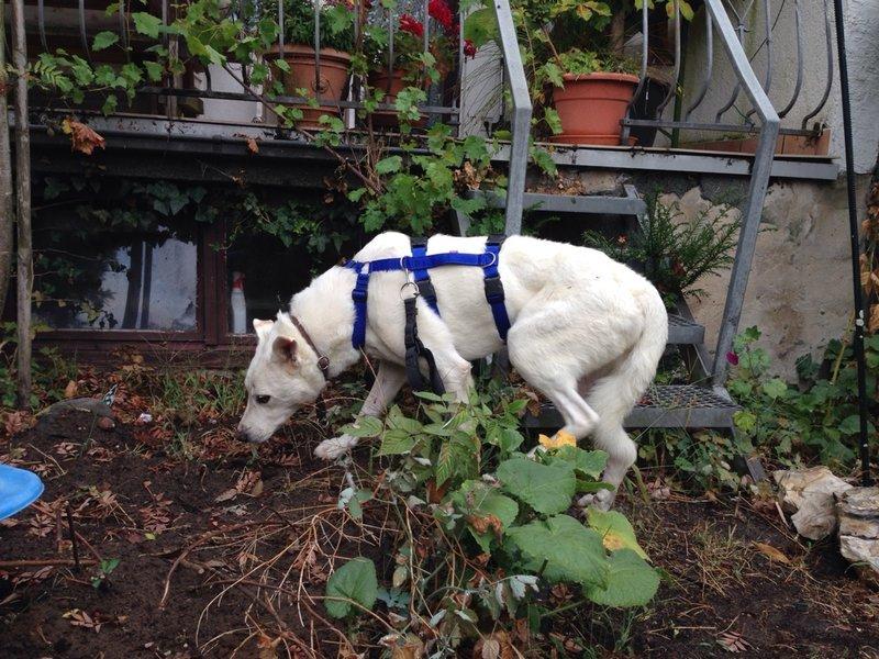 Bildertagebuch - Roccia: Ein wunderbarer, ganz besonderer Hund - VERMITTELT - 26878362pn