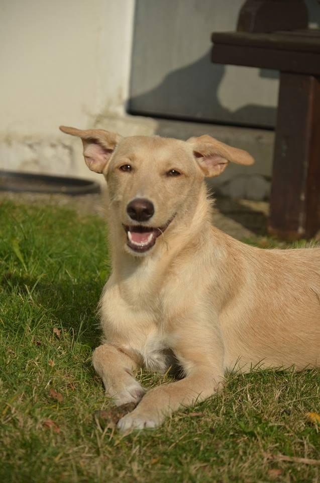 Bildertagebuch -  Kenia: pfiffiges Hunde-Mädel sucht konsequente, liebe und  souveräne Familie! - VERMITTELT - 26933123kz