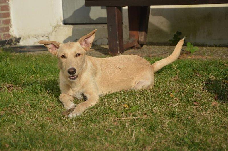 Bildertagebuch -  Kenia: pfiffiges Hunde-Mädel sucht konsequente, liebe und  souveräne Familie! - VERMITTELT - 26933124nz