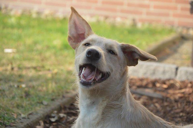 Bildertagebuch -  Kenia: pfiffiges Hunde-Mädel sucht konsequente, liebe und  souveräne Familie! - VERMITTELT - 26933130jc