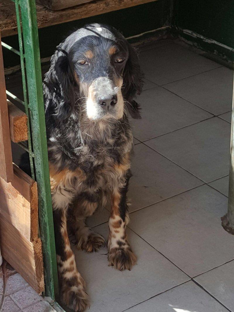 Bildertagebuch - Fley: unglaublich süßes älteres Hundemädchen wünscht sich ein liebevolles Zuhause- VERMITTELT! 26939724xt