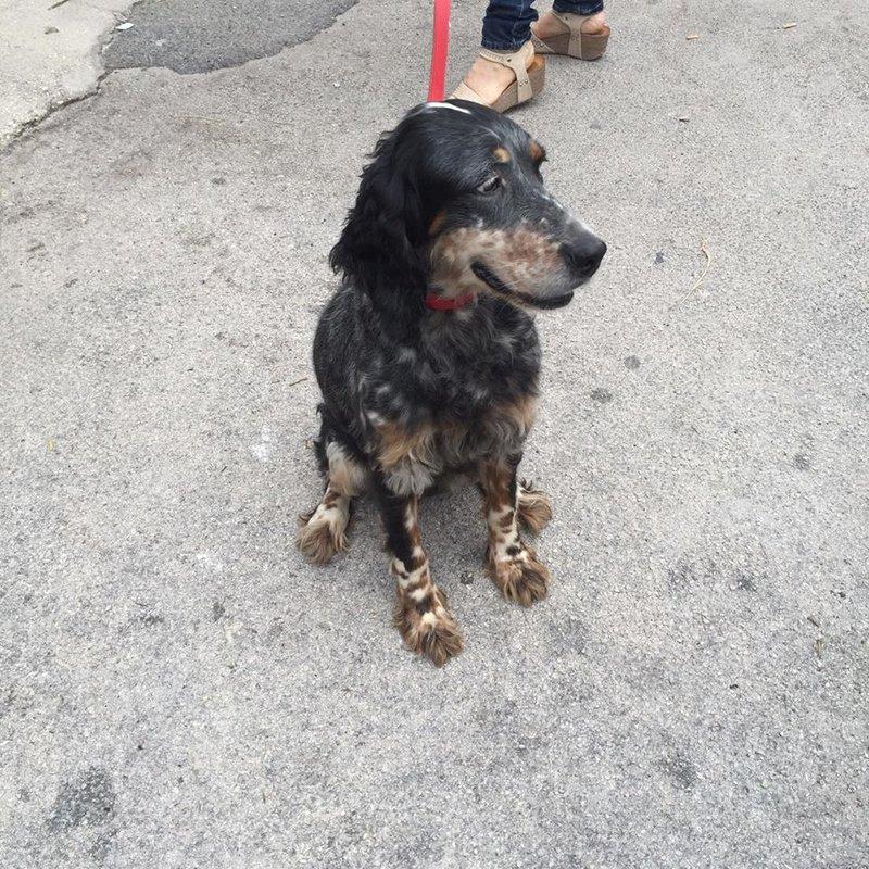 Bildertagebuch - Fley: unglaublich süßes älteres Hundemädchen wünscht sich ein liebevolles Zuhause- VERMITTELT! 26939725xi