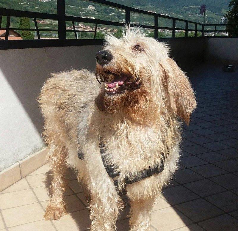 Briscola - süße Segugio-Dame sucht nach 10 Jahren im Canile ein Zuhause 26967895cu