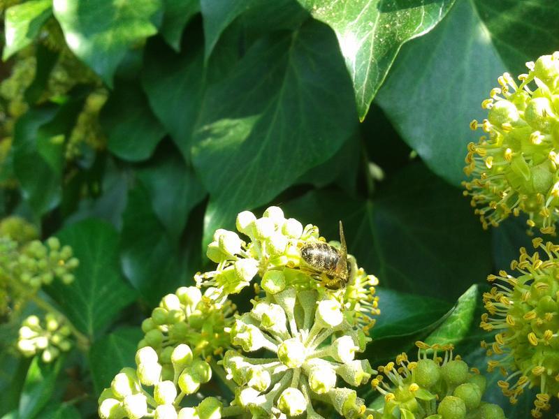 Pčelarstvo     - Page 4 26973587ci