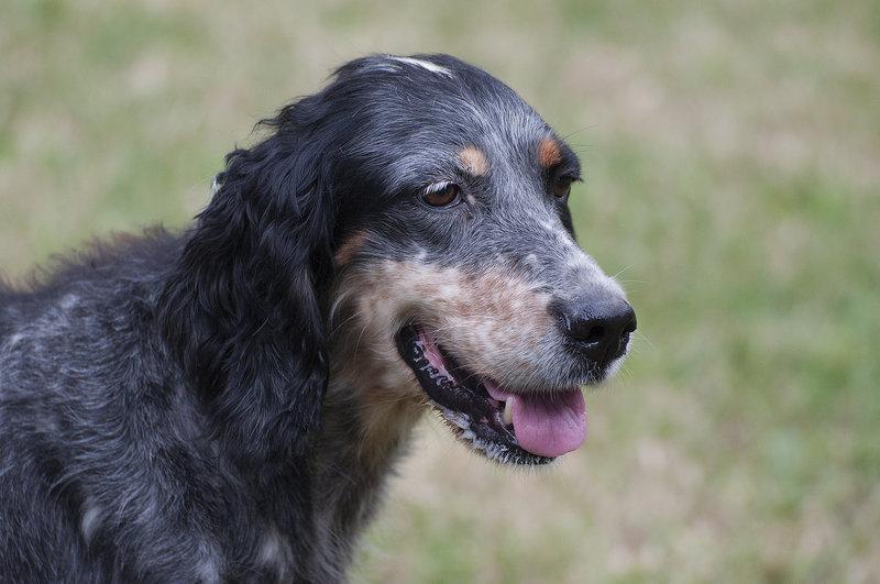 Bildertagebuch - Fley: unglaublich süßes älteres Hundemädchen wünscht sich ein liebevolles Zuhause- VERMITTELT! 27015732wo