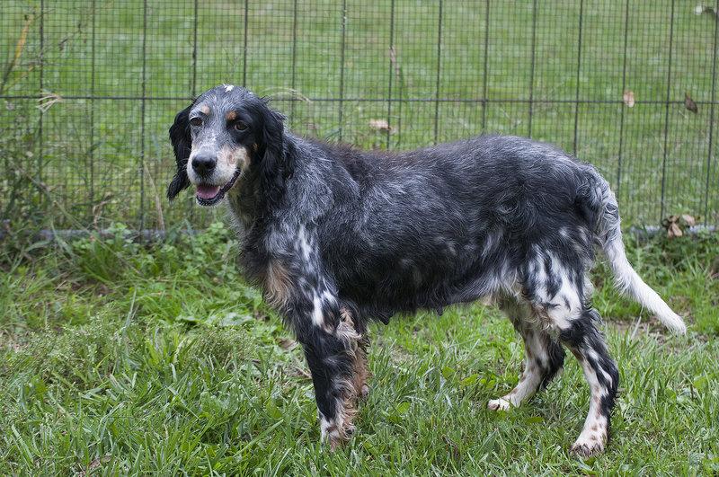 Bildertagebuch - Fley: unglaublich süßes älteres Hundemädchen wünscht sich ein liebevolles Zuhause- VERMITTELT! 27015760cq