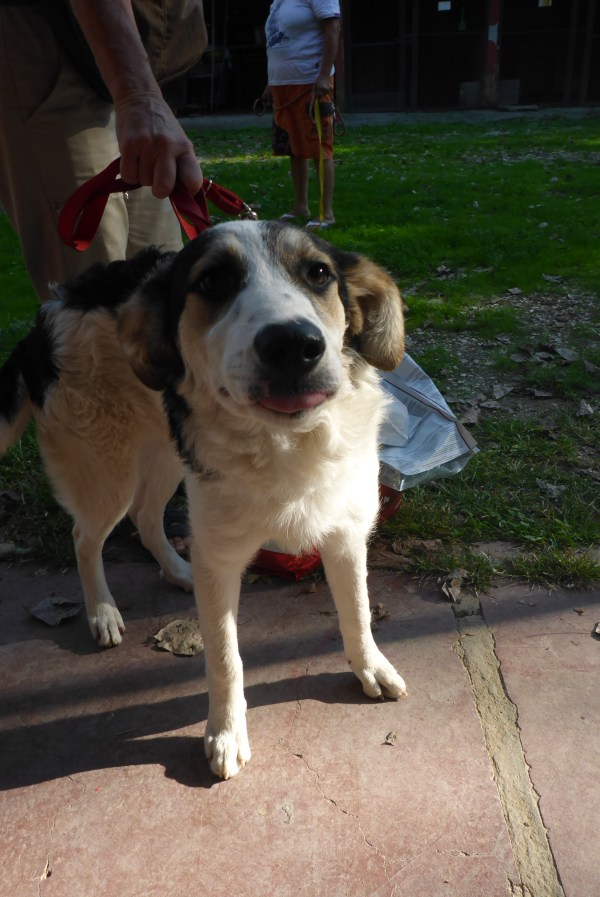Bildertagebuch - Memory, ein ganz freundliches junges Hundemädel ...über andere ORGA ZUHAUSE GEFUNDEN! 27118737uz