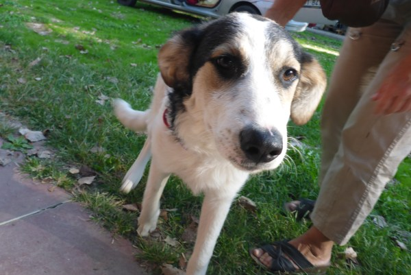 Bildertagebuch - Memory, ein ganz freundliches junges Hundemädel ...über andere ORGA ZUHAUSE GEFUNDEN! 27118740rz