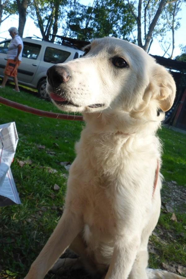 Bildertagebuch - Michelle, bezauberndes junges Hundemäuschen aus schlechter Haltung ...ZUHAUSE über andere ORGA GEFUNDEN! 27118763qu