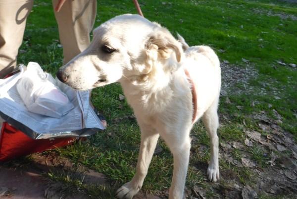 Bildertagebuch - Michelle, bezauberndes junges Hundemäuschen aus schlechter Haltung ...ZUHAUSE über andere ORGA GEFUNDEN! 27118765gh