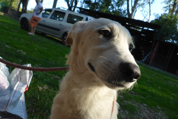 Bildertagebuch - Michelle, bezauberndes junges Hundemäuschen aus schlechter Haltung ...ZUHAUSE über andere ORGA GEFUNDEN! 27118769ql