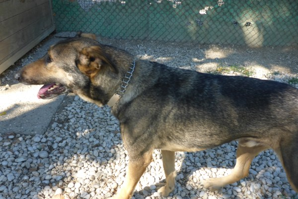 Bildertagebuch - Monokel, hübscher Hundebub wäre gerne ein dicker Hundekumpel fürs Leben ... 27166820hr