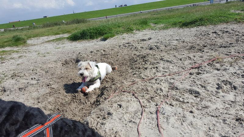 Bildertagebuch -  Willy: klein aber oho, wartet schon sehnsüchtig auf Sie- VERMITTELT! 27265133ll
