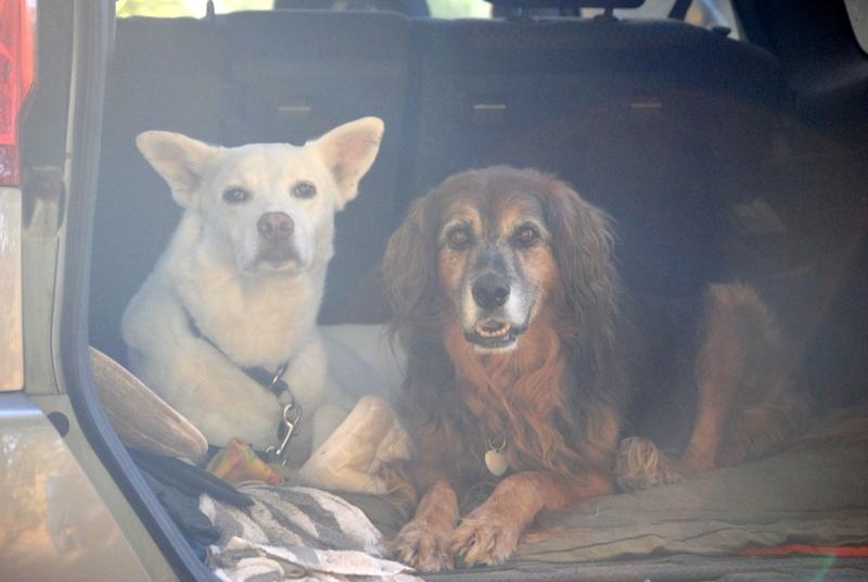 Bildertagebuch - Roccia: Ein wunderbarer, ganz besonderer Hund - VERMITTELT - 27332059wp
