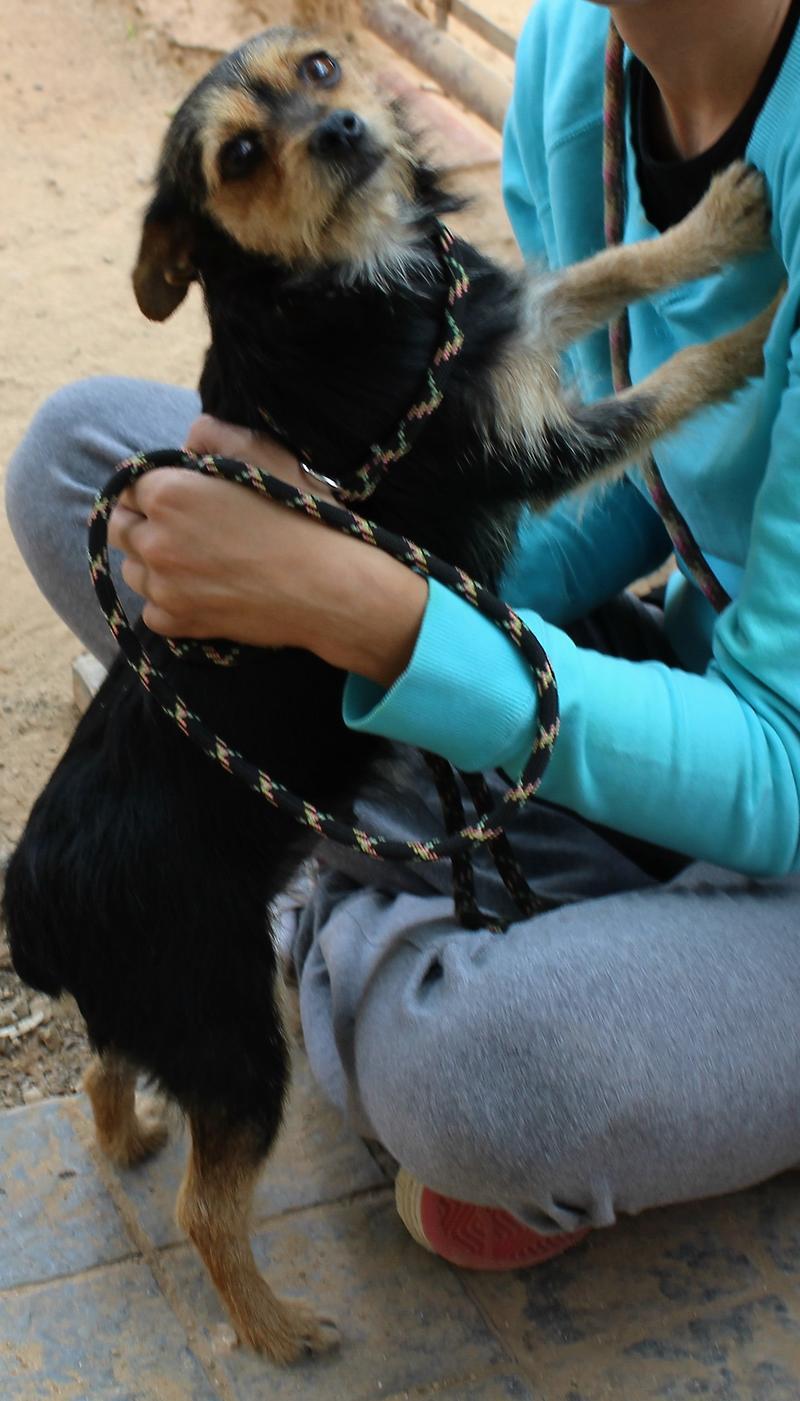 Bildertagebuch - Nora, süße verschmußte kleine Maus ... fristete ihr Dasein in einem kleinen Käfig - ZUHAUSE in SPANIEN gefunden! 27375232yk