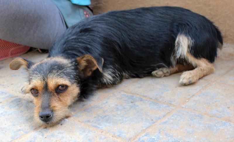 Bildertagebuch - Nora, süße verschmußte kleine Maus ... fristete ihr Dasein in einem kleinen Käfig - ZUHAUSE in SPANIEN gefunden! 27375234nh