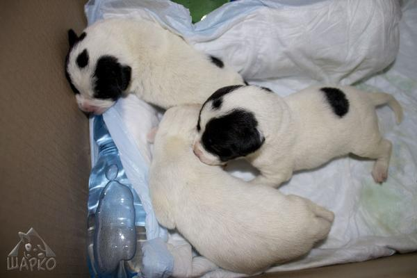Bildertagebuch Pennie - wurde (mit ihren Geschwistern) kurz nach der Geburt in einem Müllcontainer gefunden 27381086hb