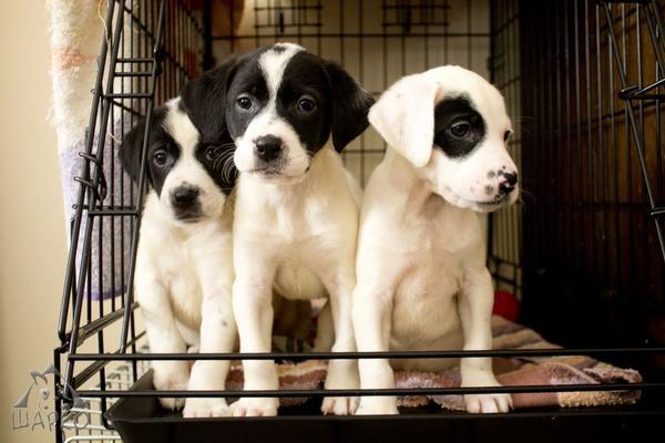 Bildertagebuch Pennie - wurde (mit ihren Geschwistern) kurz nach der Geburt in einem Müllcontainer gefunden 27381087fk