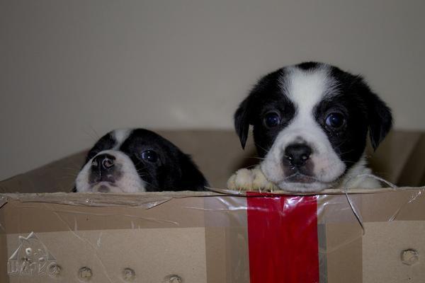 Bildertagebuch Pennie - wurde (mit ihren Geschwistern) kurz nach der Geburt in einem Müllcontainer gefunden 27381088cw