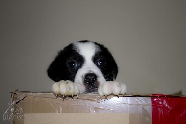 Bildertagebuch Pennie - wurde (mit ihren Geschwistern) kurz nach der Geburt in einem Müllcontainer gefunden 27381089lr