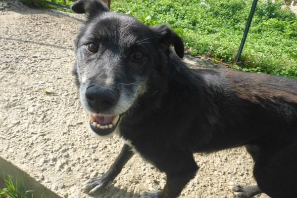 Bildertagebuch -  Baloo: freundlicher, sehr menschenbezogener Hundemann braucht endlich ein Zuhause! Wird über PRO CANALBA VERMITTELT!  27406603hk