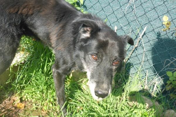 Bildertagebuch -  Baloo: freundlicher, sehr menschenbezogener Hundemann braucht endlich ein Zuhause! Wird über PRO CANALBA VERMITTELT!  27406604hp