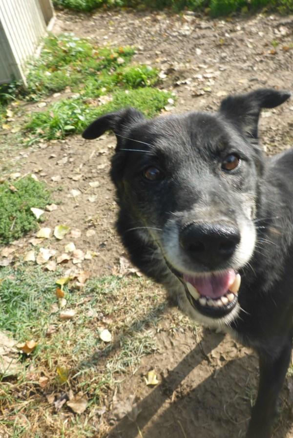 Bildertagebuch -  Baloo: freundlicher, sehr menschenbezogener Hundemann braucht endlich ein Zuhause! Wird über PRO CANALBA VERMITTELT!  27406605gj