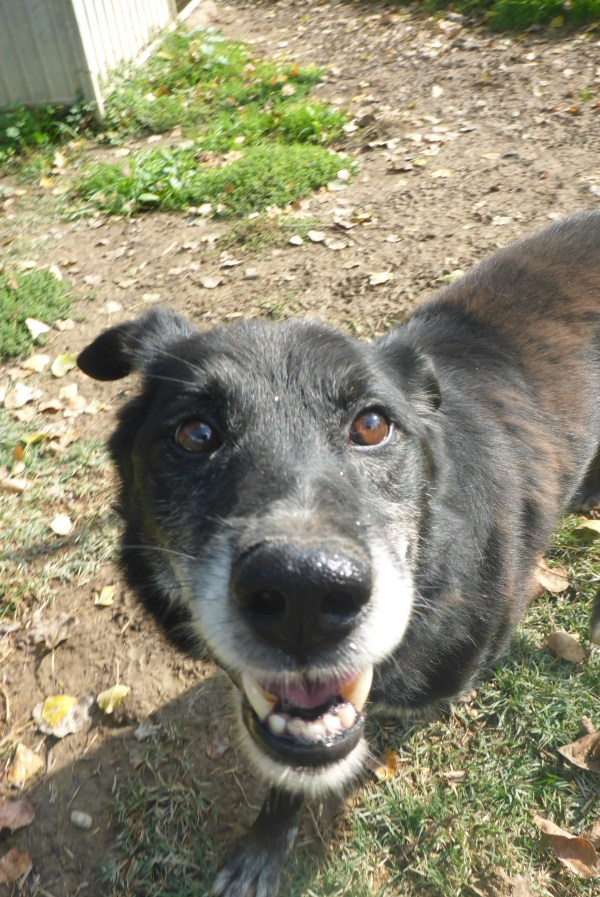 Bildertagebuch -  Baloo: freundlicher, sehr menschenbezogener Hundemann braucht endlich ein Zuhause! Wird über PRO CANALBA VERMITTELT!  27406606fq