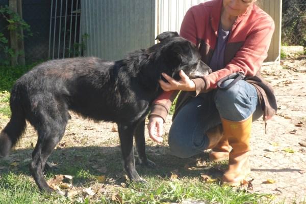 Bildertagebuch -  Baloo: freundlicher, sehr menschenbezogener Hundemann braucht endlich ein Zuhause! Wird über PRO CANALBA VERMITTELT!  27406607yo