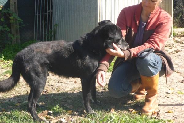 Bildertagebuch -  Baloo: freundlicher, sehr menschenbezogener Hundemann braucht endlich ein Zuhause! Wird über PRO CANALBA VERMITTELT!  27406608vh