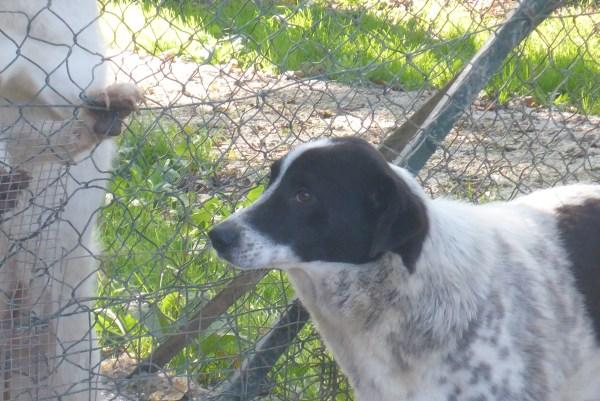 Bildertagebuch - Alwin, ein Junghund vom Pech verfolgt, hofft auf das große Glück...VERMITTELT! 27429307ym
