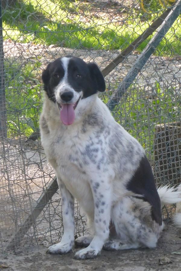 Bildertagebuch - Alwin, ein Junghund vom Pech verfolgt, hofft auf das große Glück...VERMITTELT! 27429308js