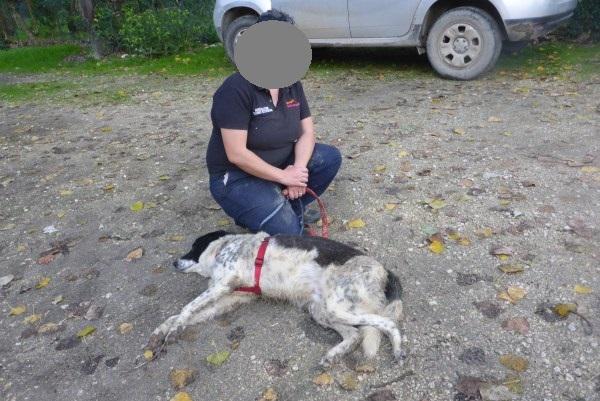 Bildertagebuch - Alwin, ein Junghund vom Pech verfolgt, hofft auf das große Glück...VERMITTELT! 27431555wq