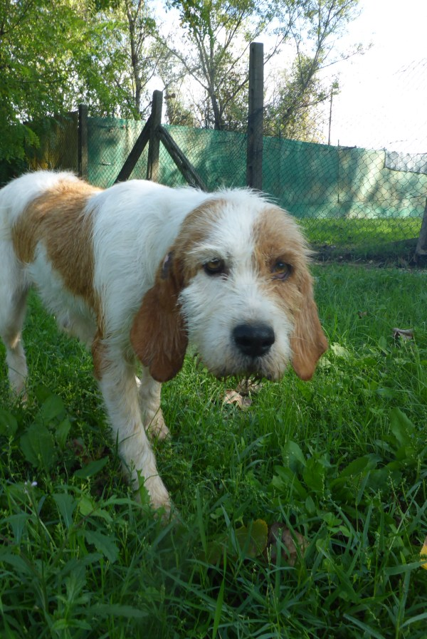Bildertagebuch -  Spina: Wer zeigt ihr, wie schön ein Hundeleben sein kann ? (ihren Freund bringt sie gerne mit) - PATE GESUCHT! 27441703ul