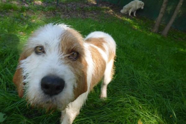 Bildertagebuch -  Spina: Wer zeigt ihr, wie schön ein Hundeleben sein kann ? (ihren Freund bringt sie gerne mit) - PATE GESUCHT! 27441705hd