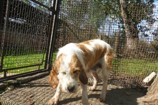 Bildertagebuch -  Spina: Wer zeigt ihr, wie schön ein Hundeleben sein kann ? (ihren Freund bringt sie gerne mit) - PATE GESUCHT! 27441707gb