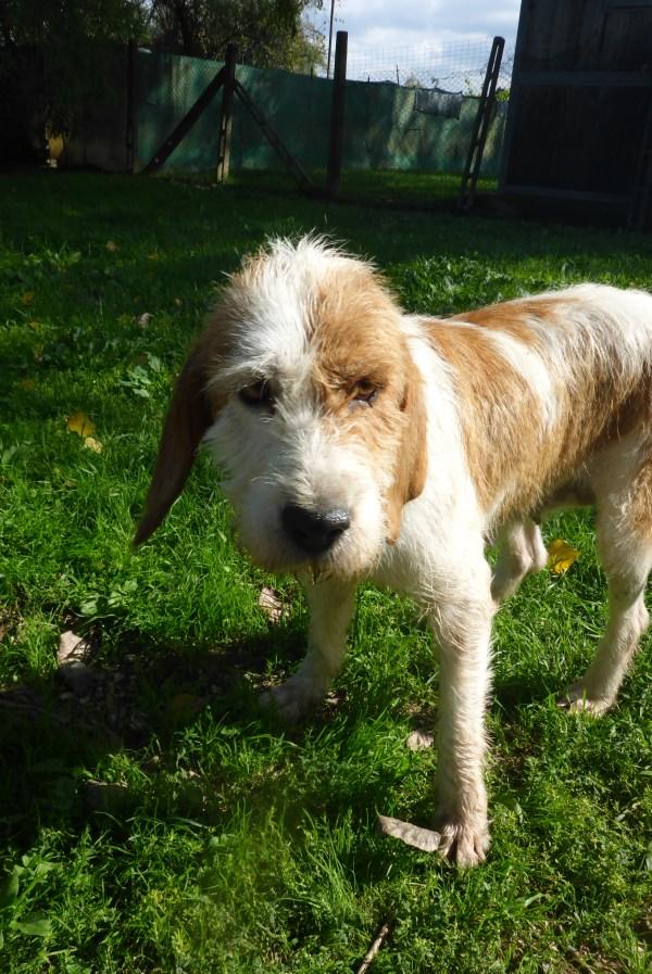 Bildertagebuch -  Spina: Wer zeigt ihr, wie schön ein Hundeleben sein kann ? (ihren Freund bringt sie gerne mit) - PATE GESUCHT! 27441710om