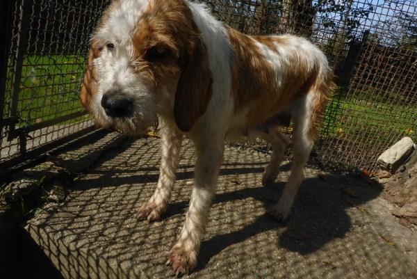 Bildertagebuch -  Spina: Wer zeigt ihr, wie schön ein Hundeleben sein kann ? (ihren Freund bringt sie gerne mit) - PATE GESUCHT! 27441711qf