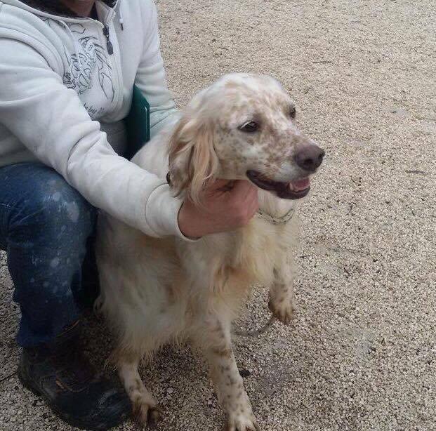 Bildertagebuch - FELICE, landete im Canile mit 1300 Hunden...ZUHAUSE IN ITALIEN GEFUNDEN! 27526087xo